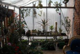Kaktusbank