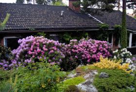 Rhododendrongrupp